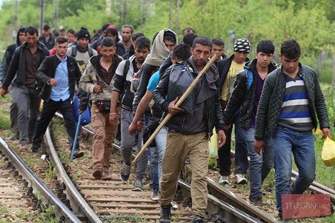 migrant,